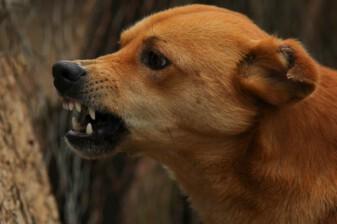 Agressie honden - gedrag bij dementie